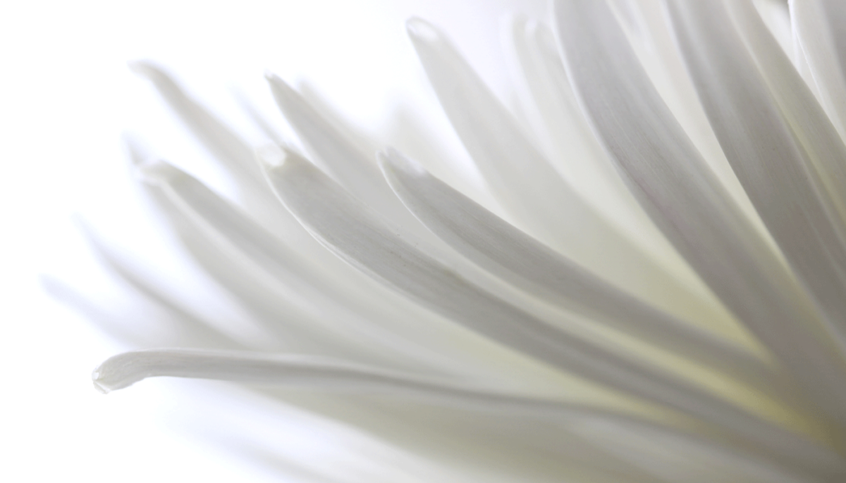 fineart-white-flower-1